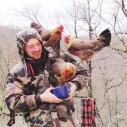 poules doré et leur propriétaire