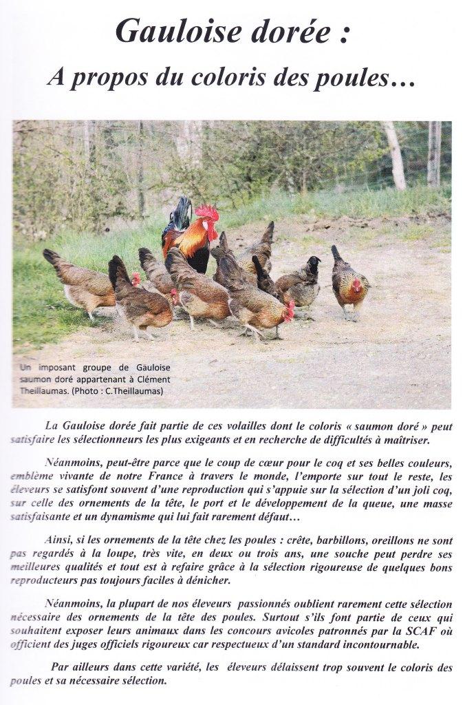 Coloris des poules 1