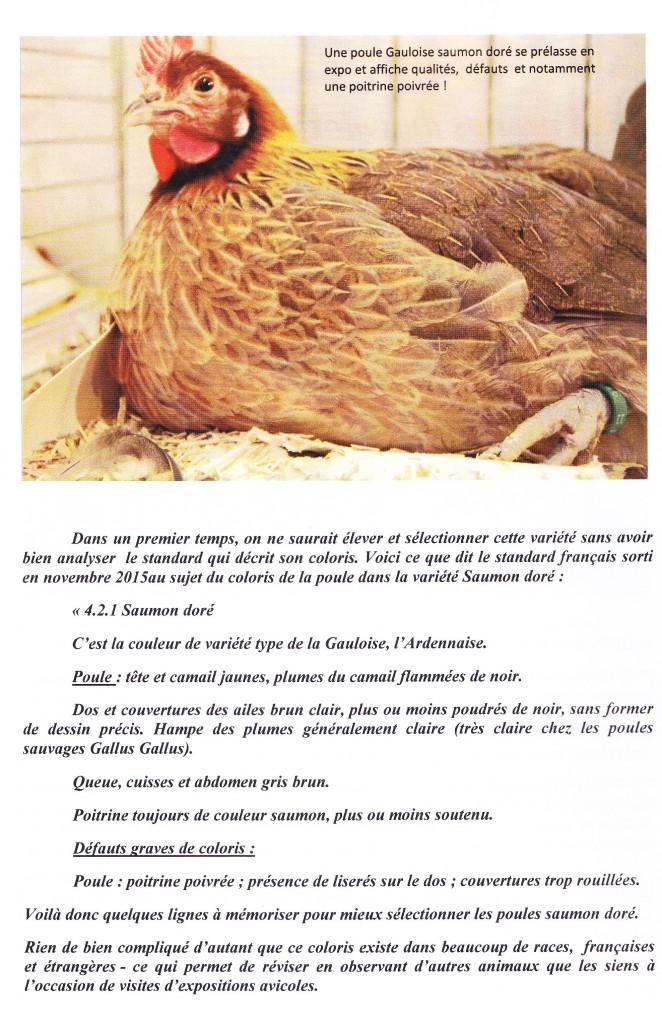 Coloris des poules 2